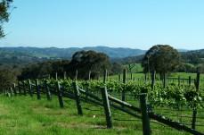 Nepenthe Winery SA