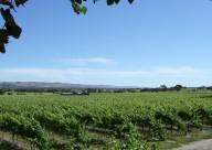 McLaren Vale Vines