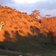 Coromandel Valley SA