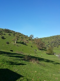 The view from our garden - Coromandel Valley
