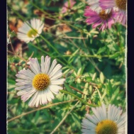 20150621_141720-EFFECTS