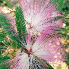 Mt-Cootha Botanic Garden