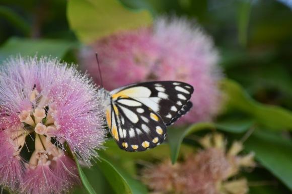 cw-butterfly