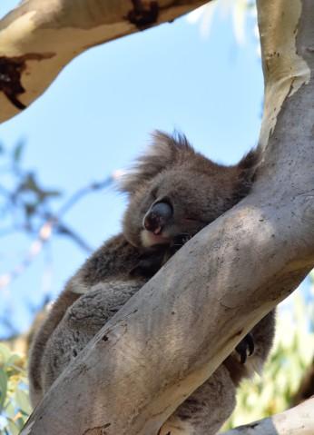 Captured in Belair National Park South Australia